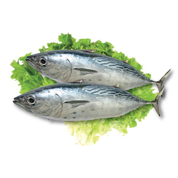Cá Ngừ Bông (Kg) | Saithanhfoods