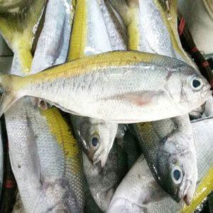 Cá trầm bì