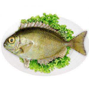 Cá kình